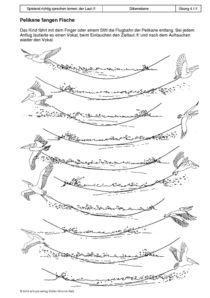 Spielend richtig sprechen lernen: der Laut /f/ 04 - Pelikane fangen Fische1